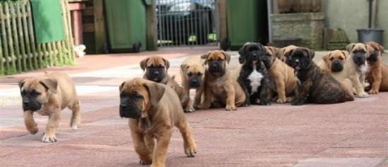 mixed pups 098[1]